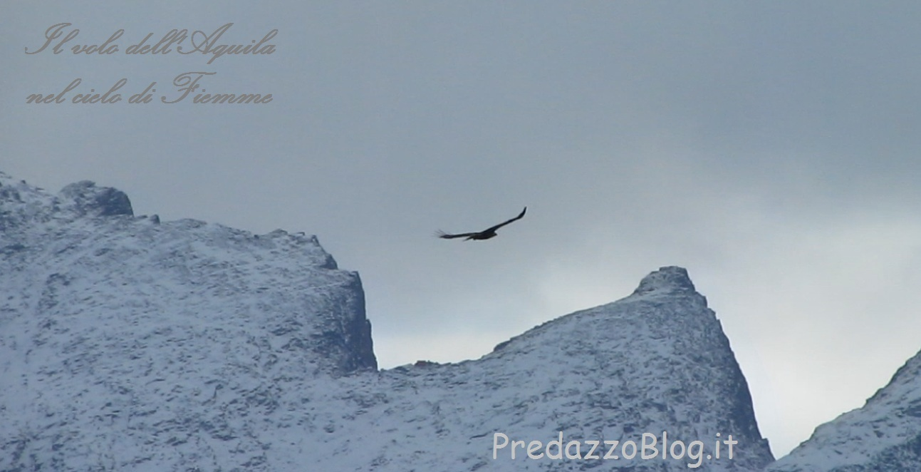 Aquila nel cielo di Fiemme by Predazzo blog Il volo dellAquila nel cielo di Fiemme   video by PredazzoBlog