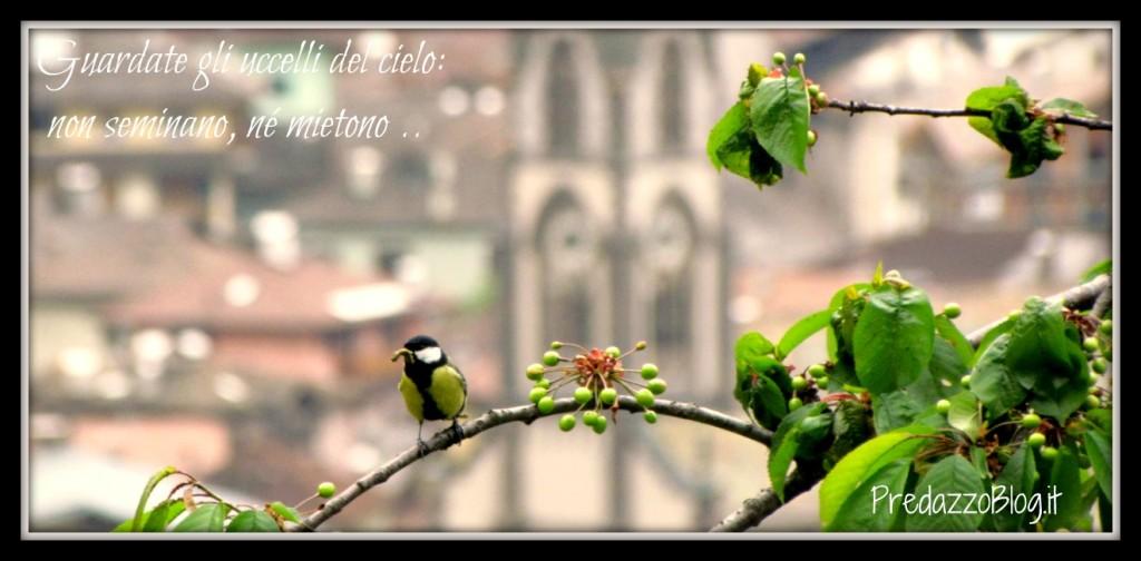 uccelli del cielo predazzo blog 1024x504 Predazzo avvisi della Parrocchia dal 27 maggio al 3 giugno