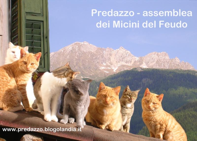 micini del feudo by mauro morandini blog predazzo 800 Niuss