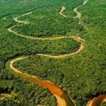 foresta amazzonica 150x150 Auguri di Buon Natale dallAmazzonia