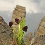 negritelle del latemar 1 150x150 Predazzo, le foto della 31° rassegna dei cori di montagna