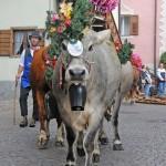 desmontegada 2011 ph Elvis Piazzi Predazzo Blog62 150x150 Desmontegada 2011