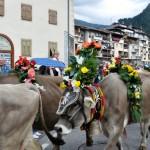 desmontegada 2011 ph Pierluigi Dallabona Predazzo Blog97 150x150 Desmontegada 2011