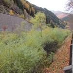 predazzo alveo avisio 2011 predazzo blog2 150x150 A proposito di alluvione