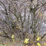 predazzo alveo avisio 2011 predazzo blog6 150x150 A proposito di alluvione