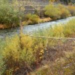 predazzo piante alveo avisio ph Marika Bettin predazzoblog 2 150x150 A proposito di alluvione 2, la risposta dellassessore Chiara Bosin