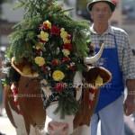 """Predazzo Fiemme Desmontegada 2012 ph Giampaolo Piazzi Elvis PredazzoBlog222 150x150 Predazzo convegno:""""Agricoltura di montagna: sfide e strategie per il futuro del  turismo, gastronomia, contadini e valligiani"""""""