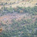 medjugorje 2012 by orizzonti di riflessione ph mauro morandini21 150x150 Predazzo   Medjugorje 2012   Fotogallery