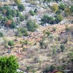 medjugorje 2012 by orizzonti di riflessione ph mauro morandini36 150x150 Predazzo   Medjugorje 2012   Fotogallery