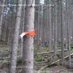 presepi nel bosco ziano fiemme ph mauro morandini predazzo blog24 150x150 Le foto dei Presepi nel Bosco di Ziano di Fiemme
