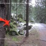 presepi nel bosco ziano fiemme ph mauro morandini predazzo blog33 150x150 Le foto dei Presepi nel Bosco di Ziano di Fiemme
