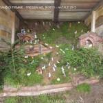presepi nel bosco ziano fiemme ph mauro morandini predazzo blog58 150x150 Le foto dei Presepi nel Bosco di Ziano di Fiemme