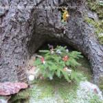 presepi nel bosco ziano fiemme ph mauro morandini predazzo blog61 150x150 Le foto dei Presepi nel Bosco di Ziano di Fiemme