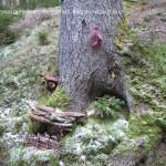 presepi nel bosco ziano fiemme ph mauro morandini predazzo blog62 150x150 Le foto dei Presepi nel Bosco di Ziano di Fiemme