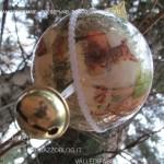 presepi nel bosco ziano fiemme ph mauro morandini predazzo blog79 150x150 Le foto dei Presepi nel Bosco di Ziano di Fiemme