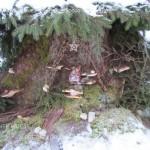 presepi nel bosco ziano fiemme ph mauro morandini predazzo blog96 150x150 Le foto dei Presepi nel Bosco di Ziano di Fiemme