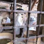 Presepio di Varena valle di fiemme ph by Mauro Morandini predazzoblog.it valle di fiemme it139 150x150 Il Presepio di Varena in Valle di Fiemme in 148 foto