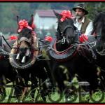 cavalli norici predazzo blog maso lena 150x150 Montagna Accessibile 14 escursioni alpine in Fiemme e Fassa percorribili da persone con disabilità motoria