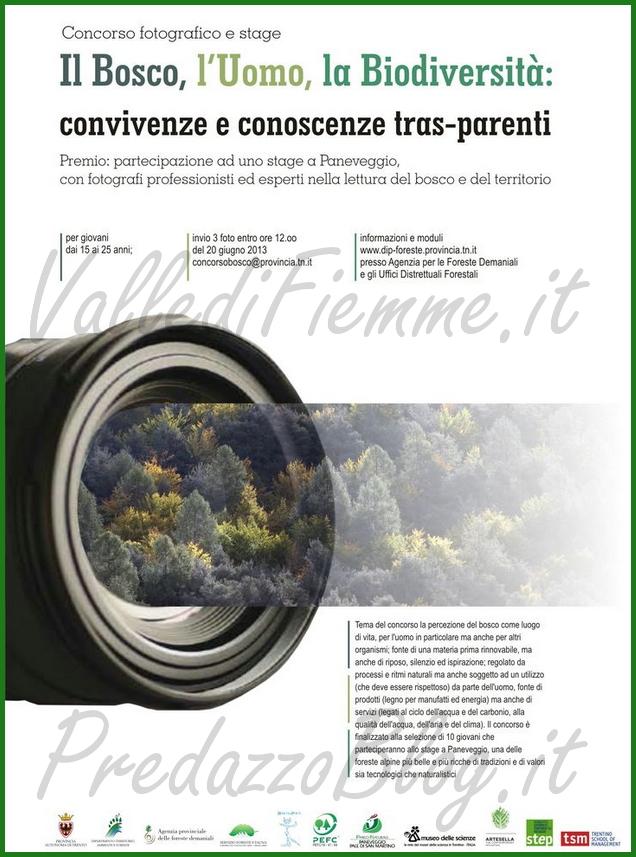 concorso fotografico il bosco parco paneveggio predazzo blog