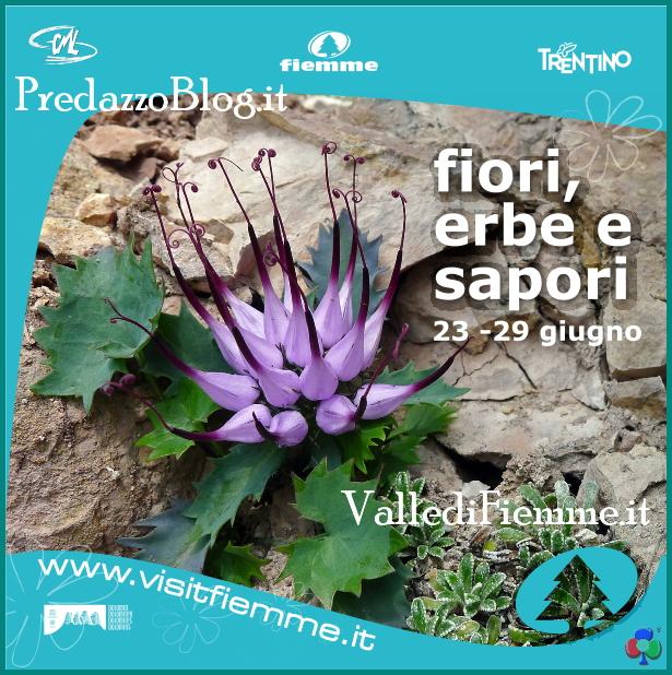 fiori erbe sapori predazzo fiemme 2013