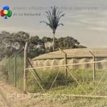 ripetitori e antenne cammuffati da alberi e piante predazzo blog9 150x150 Antenne, ripetitori e tralicci.. dentro lambiente fanno i capricci