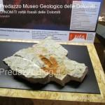 """predazzo museo geologico delle dolomiti dinomiti rettili fossili delle dolomiti10 150x150 Predazzo le foto della mostra """"DinoMiti, rettili fossili e dinosauri nelle Dolomiti"""""""