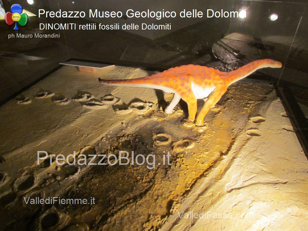 """predazzo museo geologico delle dolomiti dinomiti rettili fossili delle dolomiti13  Predazzo, """"Settimana della geologia"""" al Museo Geologico delle Dolomiti."""