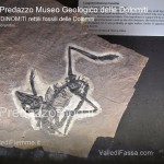 predazzo museo geologico delle dolomiti dinomiti rettili fossili delle dolomiti36 150x150 Predazzo, il Sentiero Geologico del Doss Capel, un libro di 200 milioni di anni