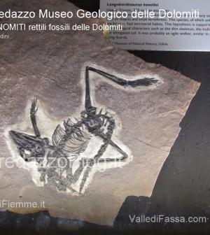 predazzo museo geologico delle dolomiti - dinomiti rettili fossili delle dolomiti36