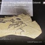 """predazzo museo geologico delle dolomiti dinomiti rettili fossili delle dolomiti37 150x150 Predazzo le foto della mostra """"DinoMiti, rettili fossili e dinosauri nelle Dolomiti"""""""