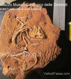 predazzo museo geologico delle dolomiti - dinomiti rettili fossili delle dolomiti40