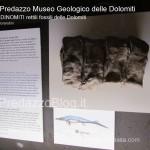 """predazzo museo geologico delle dolomiti dinomiti rettili fossili delle dolomiti44 150x150 Predazzo le foto della mostra """"DinoMiti, rettili fossili e dinosauri nelle Dolomiti"""""""