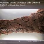 """predazzo museo geologico delle dolomiti dinomiti rettili fossili delle dolomiti50 150x150 Predazzo le foto della mostra """"DinoMiti, rettili fossili e dinosauri nelle Dolomiti"""""""