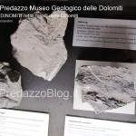 """predazzo museo geologico delle dolomiti dinomiti rettili fossili delle dolomiti56 150x150 Predazzo le foto della mostra """"DinoMiti, rettili fossili e dinosauri nelle Dolomiti"""""""