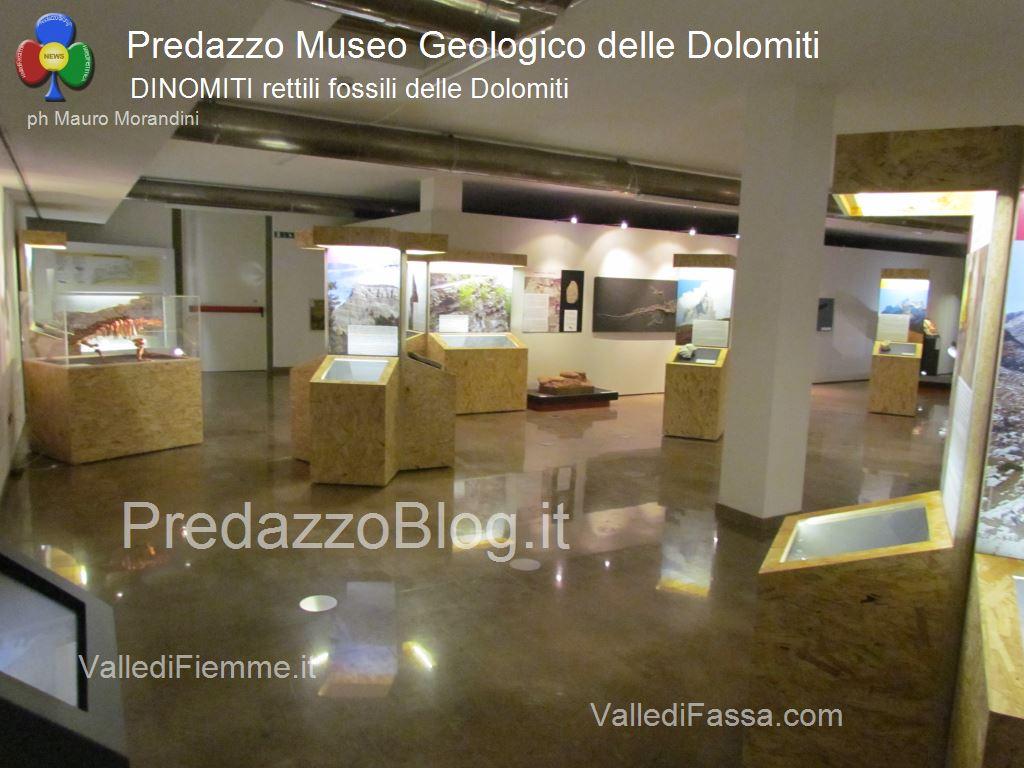 predazzo museo geologico delle dolomiti dinomiti rettili fossili delle dolomiti73 Le attività estive al Museo Geologico delle Dolomiti di Predazzo
