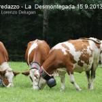 predazzo desmontegada mucche 2013 predazzoblog by Lorenzo Delugan1 150x150 Predazzo, la fotogallery della Desmontegada 2013