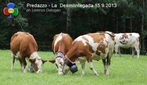 predazzo desmontegada mucche 2013 predazzoblog by Lorenzo Delugan1 300x173 predazzo desmontegada mucche 2013 predazzoblog by Lorenzo Delugan1