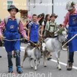 predazzo desmontegada mucche 2013 predazzoblog by Lorenzo Delugan24 150x150 Predazzo, la fotogallery della Desmontegada 2013