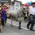 predazzo desmontegada mucche 2013 predazzoblog by Lorenzo Delugan26 150x150 Predazzo, la fotogallery della Desmontegada 2013