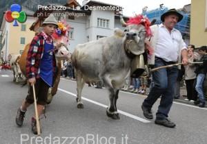 predazzo desmontegada mucche 2013 predazzoblog by Lorenzo Delugan26 300x210 predazzo desmontegada mucche 2013 predazzoblog by Lorenzo Delugan26