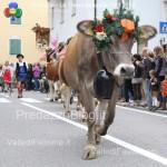 predazzo desmontegada mucche 2013 predazzoblog by Lorenzo Delugan27 150x150 Predazzo, la fotogallery della Desmontegada 2013