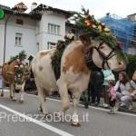 predazzo desmontegada mucche 2013 predazzoblog by Lorenzo Delugan31 150x150 Predazzo, la fotogallery della Desmontegada 2013