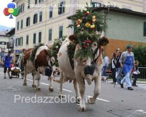 predazzo desmontegada mucche 2013 predazzoblog by Lorenzo Delugan43 300x242 predazzo desmontegada mucche 2013 predazzoblog by Lorenzo Delugan43