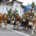 predazzo desmontegada mucche 2013 predazzoblog by Lorenzo Delugan46 150x150 Predazzo, la fotogallery della Desmontegada 2013