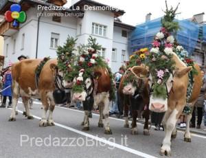 predazzo desmontegada mucche 2013 predazzoblog by Lorenzo Delugan46 300x230 predazzo desmontegada mucche 2013 predazzoblog by Lorenzo Delugan46