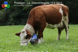 predazzo desmontegada mucche 2013 predazzoblog by Lorenzo Delugan50 300x202 predazzo desmontegada mucche 2013 predazzoblog by Lorenzo Delugan50