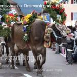 predazzo desmontegada mucche 2013 predazzoblog115 150x150 Predazzo, la fotogallery della Desmontegada 2013
