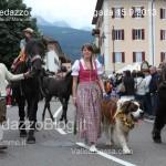 predazzo desmontegada mucche 2013 predazzoblog145 150x150 Predazzo, la fotogallery della Desmontegada 2013