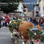 predazzo desmontegada mucche 2013 predazzoblog170 150x150 Predazzo, la fotogallery della Desmontegada 2013