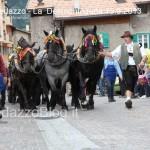predazzo desmontegada mucche 2013 predazzoblog187 150x150 Predazzo, la fotogallery della Desmontegada 2013